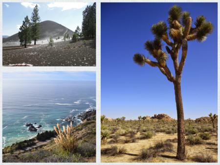 Sceneries in California