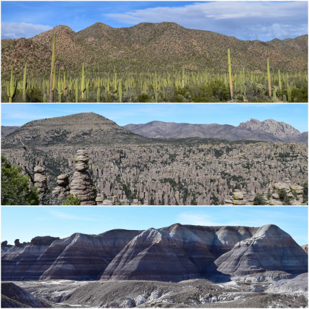 Arizona: Saguaro NP, Chiricahua Monument and Blue Mesas at Petrified Forest NP